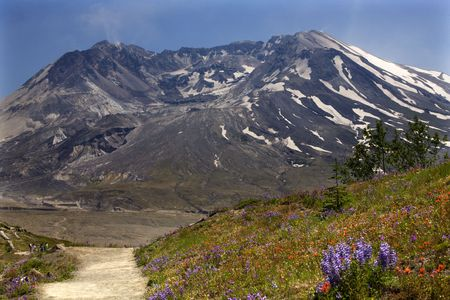 Wildflowers Trail Red Indian Paintbrush, Purple Lupine and Larkspur, Mount Saint Helens Volcano National Park Washington