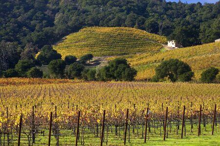 napa valley: Napa Vineyards in the Morning Fog California