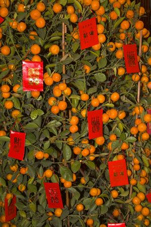 Orange New Years Tree with Red Packets Beijing China