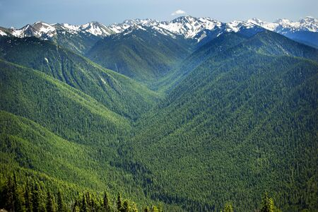 Green Valleys Evergreens photo