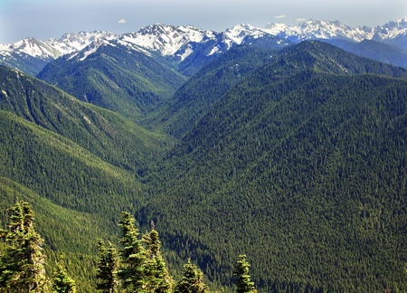 summer olympics: Green Valleys Evergreens, Snow Mountains Hurricaine Ridge Olympic National Park Washington State Pacific Northwest  Ridge Line Stock Photo