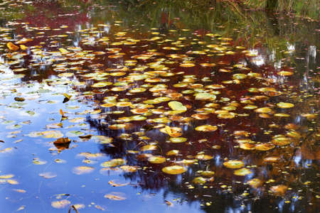 Lily Pads Fall Colors Water Reflections Yellow, Green Red Blue Van Dusen Gardens Vancouver British Columbia Canada photo