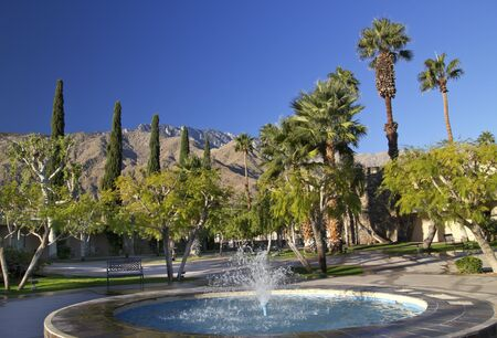 Fan Palms Trees Blue Fountain Palm Springs California washingtonia filifera photo