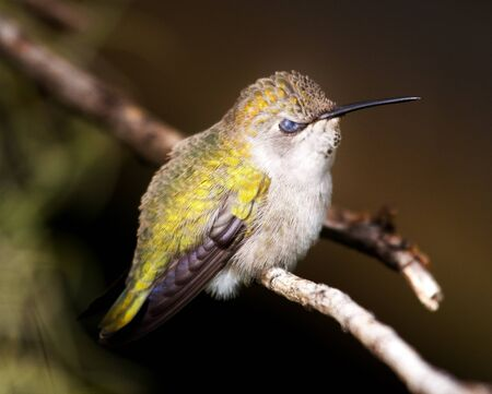 anna: Angry Bird, Anna Stock Photo
