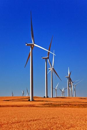 Wind Turbines Wheatfields Ripe Wheat for Harverst Palouse Washington Stock fotó - 12017404