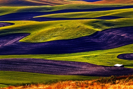 palouse: Yellow Green Wheat Fields Black Dirt Fallow Land from Steptoe Butte at Palouse Washington State Pacific Northwest.  Steptoe Butte is the highest spot in the Palouse, Washington.