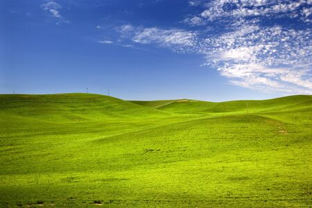 Green Wheat Grass Fields Blue Skies Palouse Washington State Pacific Northwest photo
