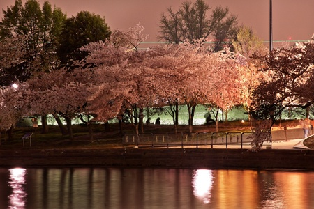 Tidal Baisn Cherry Blossoms Martin Luther King Memorial Evening Washington DC photo
