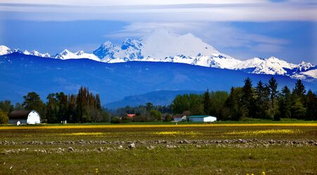 Mount Baker Skagit Valley Farm Yellow Flowers Snow Mountain Washington State Pacific Northwest photo