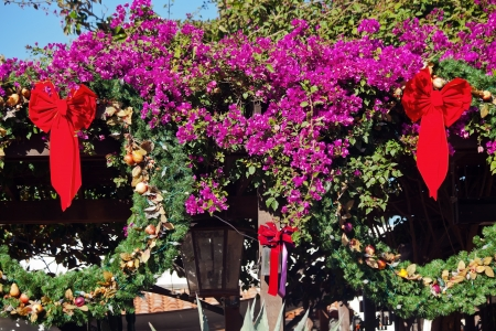 christmas wreath decorations purple bounganvilla purple cactus garden old san diego town california stock photo - Cactus Christmas Decorations