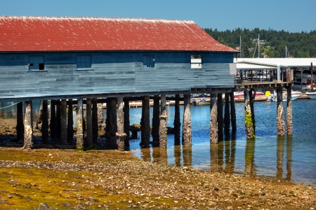 barnacles: Old Wooden Fishing Dock Low Tide Gig Harbor, Pierce County, Washington State Pacific Northwest