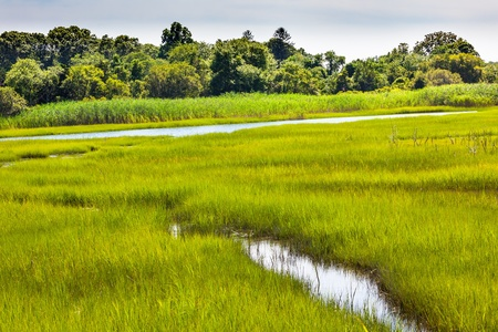 salt marsh: Padnaram Green Grass Salt Water Marsh Dartmouth Masschusetts