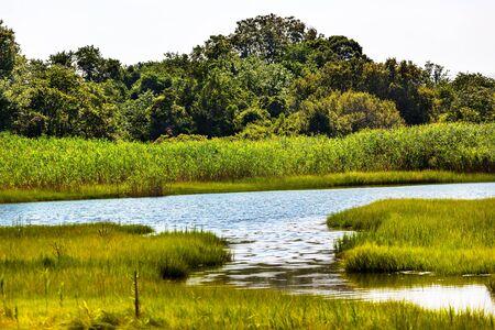 Padnaram Green Grass Salt Water Marsh Dartmouth Masschusetts
