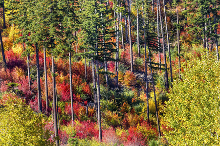 the sides: Fall Colors Mountain Sides Forest Stevens Pass Leavenworth Washington