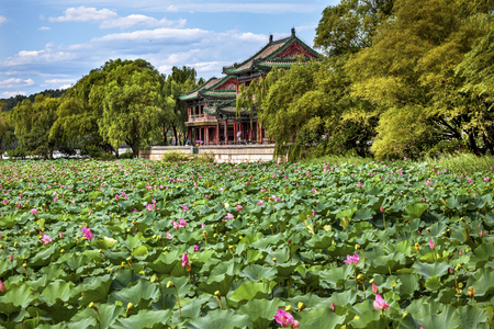 people's cultural palace: Red Pavilion Lotus Pads Garden Summer Palace Park, Beijing China Willow Green Trees