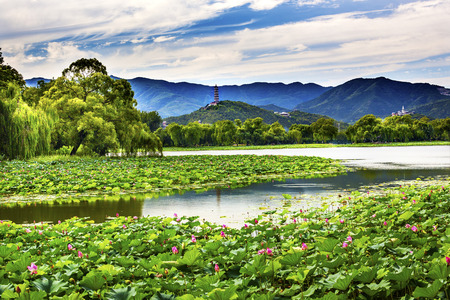 Yue Feng Pagonda Pink Lotus Pads Garden Reflection Summer Palace Beijing China
