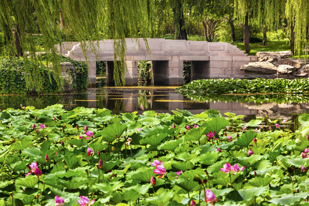 people's cultural palace: Pink Lotus Pads Garden Reflection Bridge Willow Trees Summer Palace Beijing China