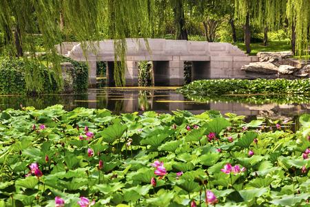 Pink Lotus Pads Garden Reflection Bridge Willow Trees Summer Palace Beijing China