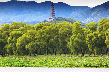 Yue Feng Pagonda Pink Lotus Pads Garden Willow Trees Summer Palace Beijing China Editorial