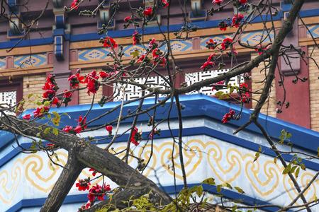 yat: Red Bombax Ceiba Kapok Cotton Flower Guangzhou City Flower Sun Yat-Sen Memorial Guangzhou City Guangdong Province China.  Sun Yat-Sen
