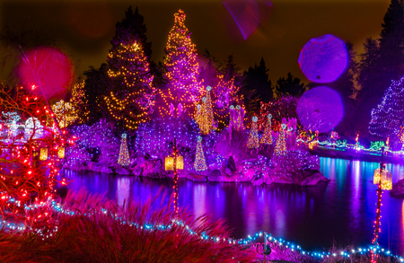 Pink Purple Blue Christmas Trees Lights Reflection Lake Van Dusen Garden Vancouver British Columbia Canada