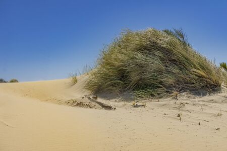 Green Grass Sand Dunes Natioinal Recreation Area Oregon