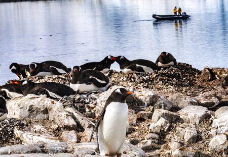 Tourists Gentoo Penguins Rookery Damoy Point Antarctic Peninsula Antarctica.