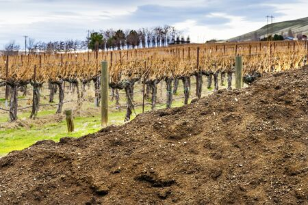 Red Mountain Dirt Soil Grape Vines Row Wineries Winter Benton City Washington