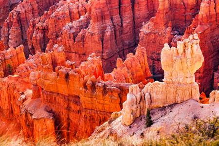 Hoodoos White Limestone Bryce Point Bryce Canyon National Park Utah