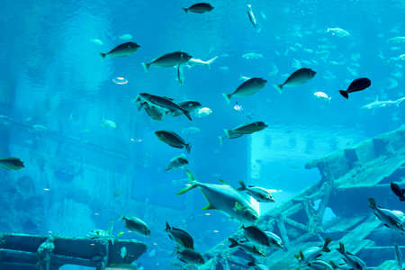 Blurry photo of a large blue sea aquarium with different sale water fishes and coral reefs