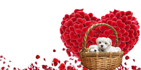 Cute puppies inside basket symbolizing care and love on white background for Valentines day. Symbols of love for Happy Women's, Mother's, Valentine's Day, birthday greeting card design and template with copy space