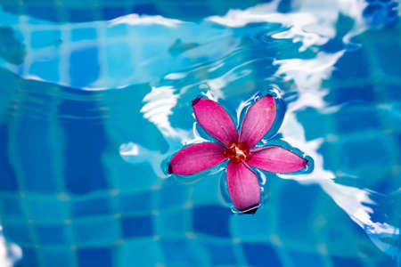 Pink flower closeup shot while floating on water Stock Photo