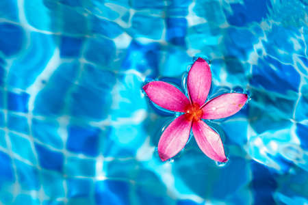 Pink flower closeup shot while floating on a pond water