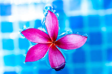 Pink flower macro shot while floating on a blue pond water