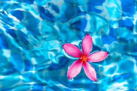 Pink flower closeup shot while floating on a blue pond water