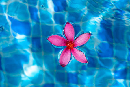 Pink flower closeup shot while floating on a pond