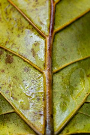 Macro shot of a leaf. Close up shot of leaf focusing on the middle stem