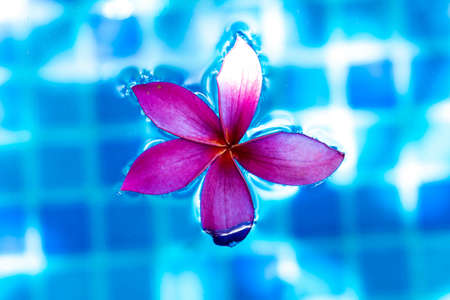 Closeup Pink flower while floating on a blue pond water