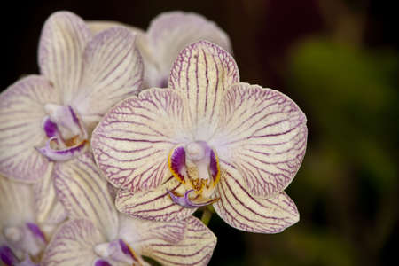 Orchid Stock Photo - 7140405