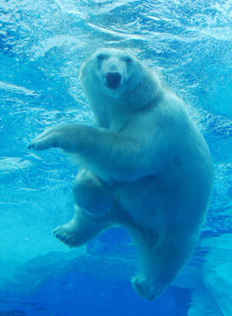 polar bear: Polar Bear Smiling