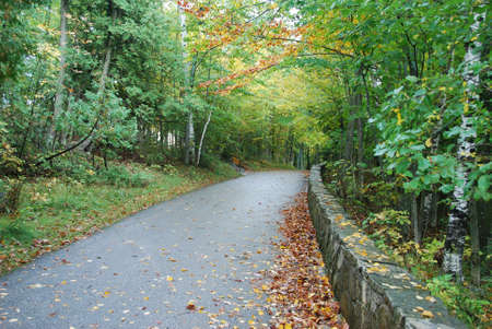 curving: Woodland road curving into early fall foliage Stock Photo