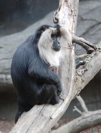 macaque: Macaque s�ance sur l'arbre