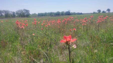 Wild flowers Stok Fotoğraf