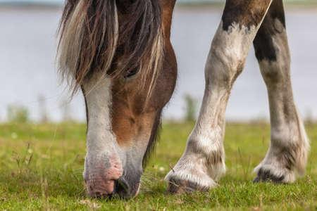 Cute Horse Stock Photo