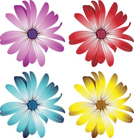 daisy vector: daisy flowers