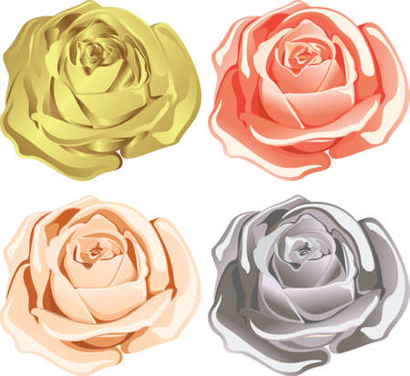 abstract rose: rose