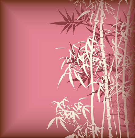 Chiloscyllium