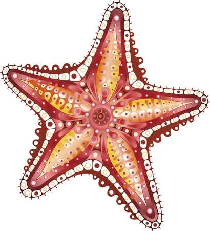 etoile de mer: Starfish Résumé
