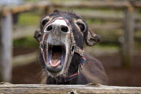 Smile of a donkey