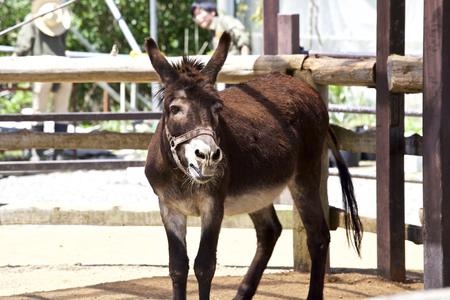 Donkey in animal farm Imagens